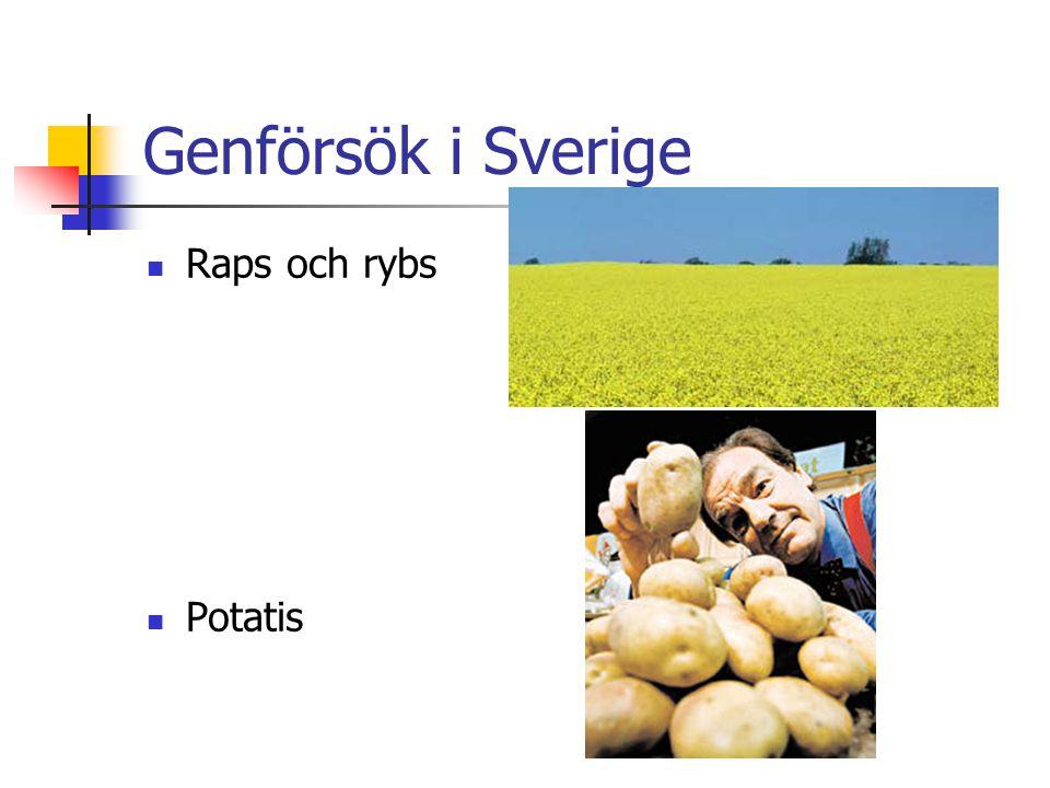 Genförsök i Sverige Raps och rybs Potatis