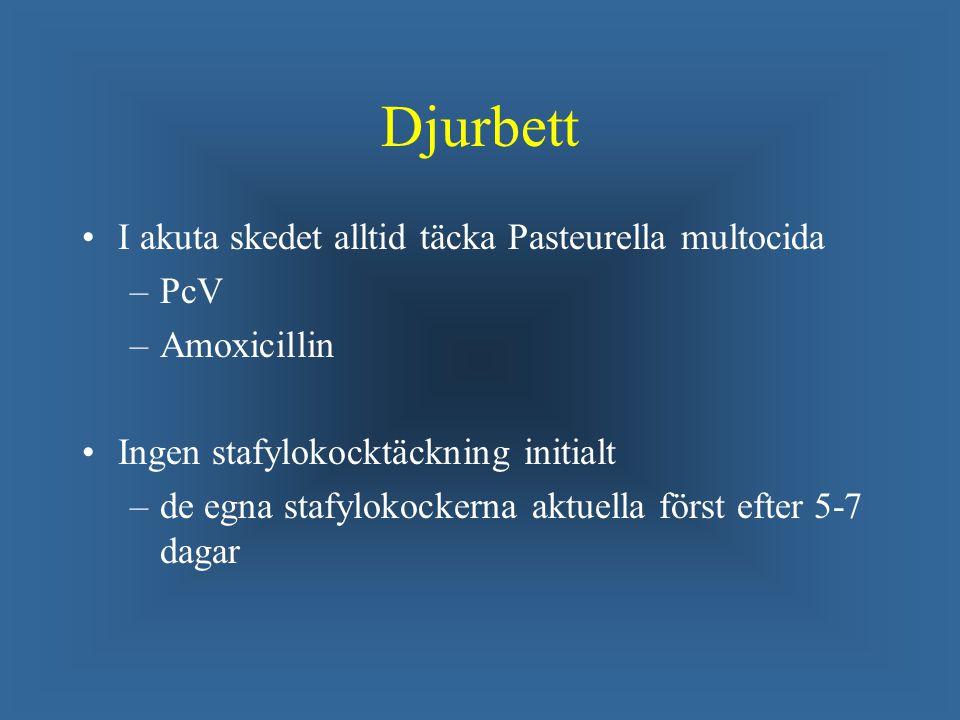 Djurbett I akuta skedet alltid täcka Pasteurella multocida PcV
