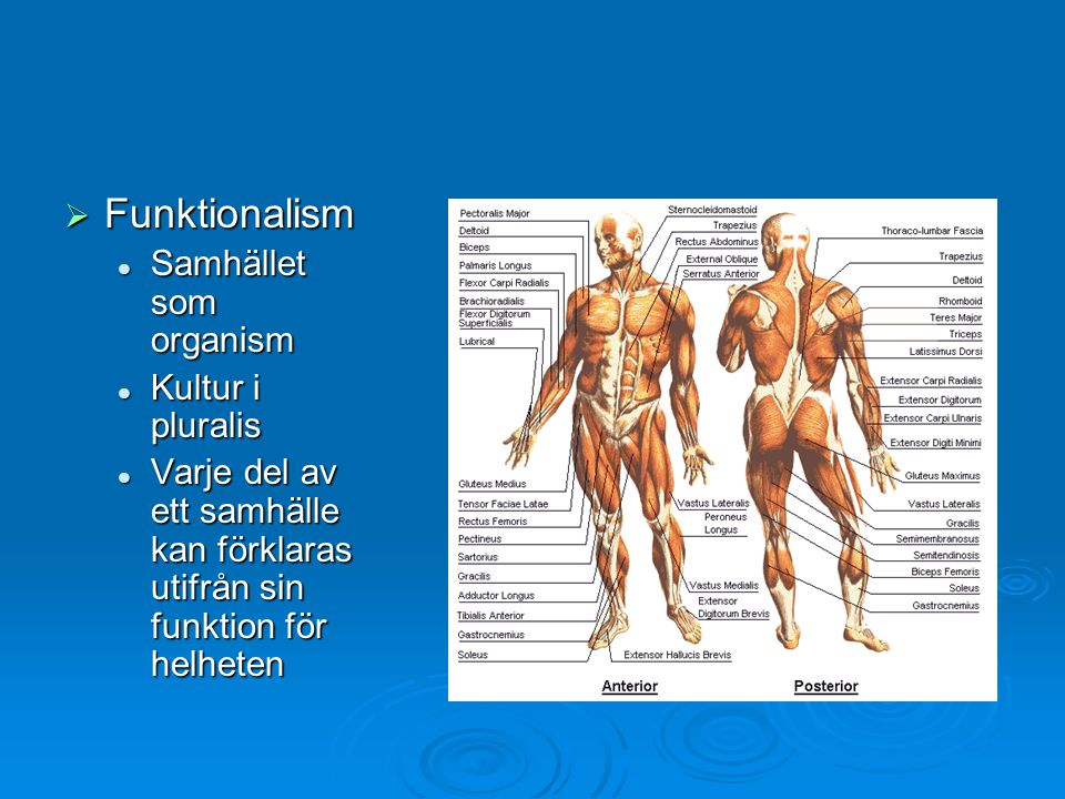 Funktionalism Samhället som organism Kultur i pluralis