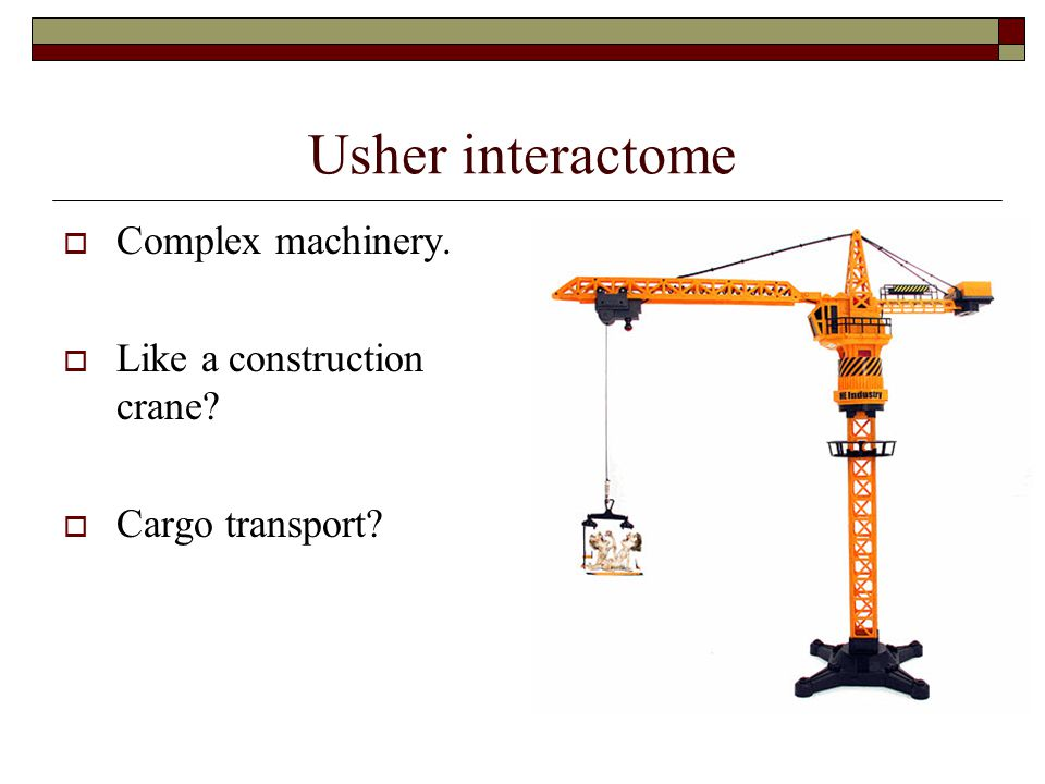 Usher interactome Complex machinery. Like a construction crane