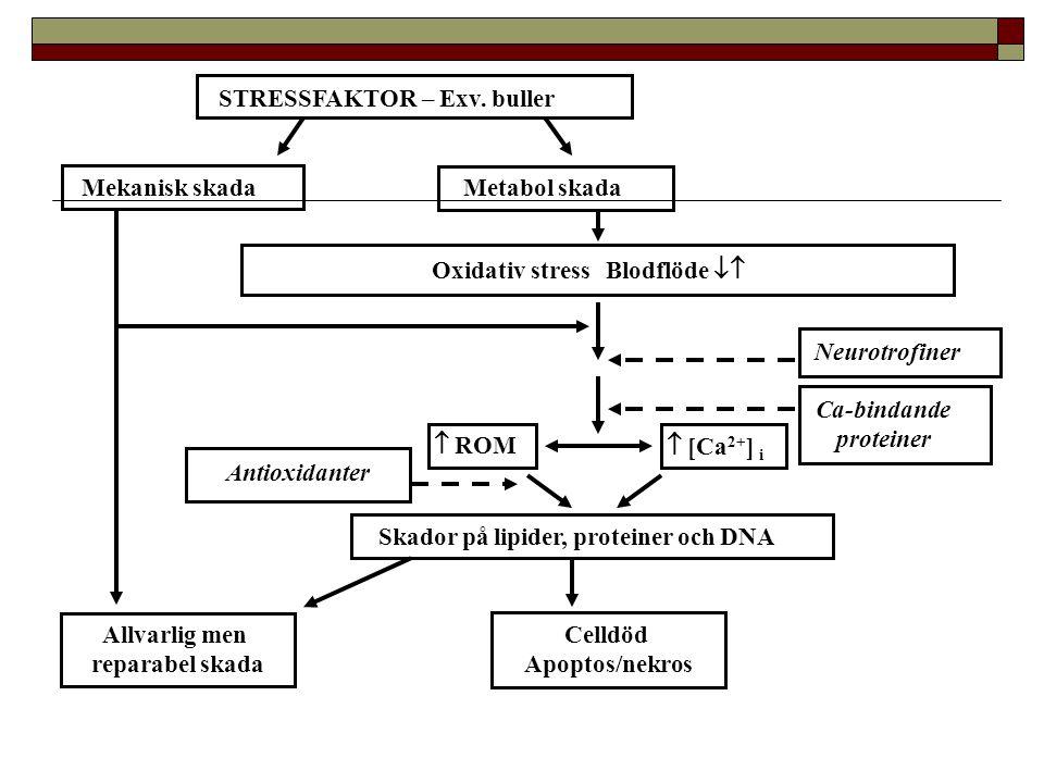 STRESSFAKTOR – Exv. buller