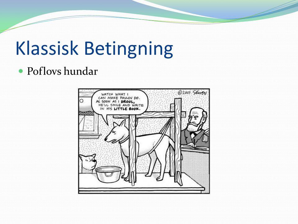 Klassisk Betingning Poflovs hundar