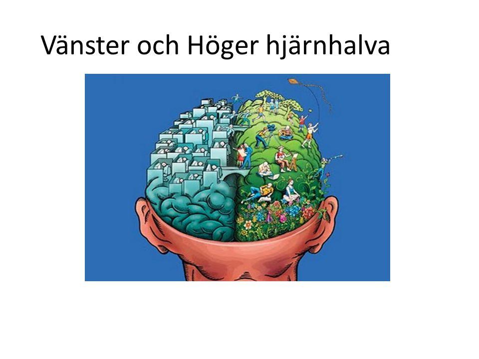 Vänster och Höger hjärnhalva