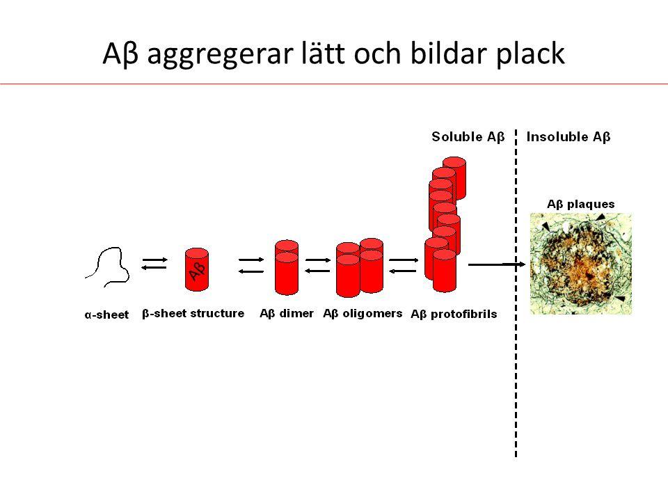 Aβ aggregerar lätt och bildar plack