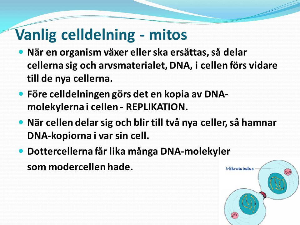Vanlig celldelning - mitos
