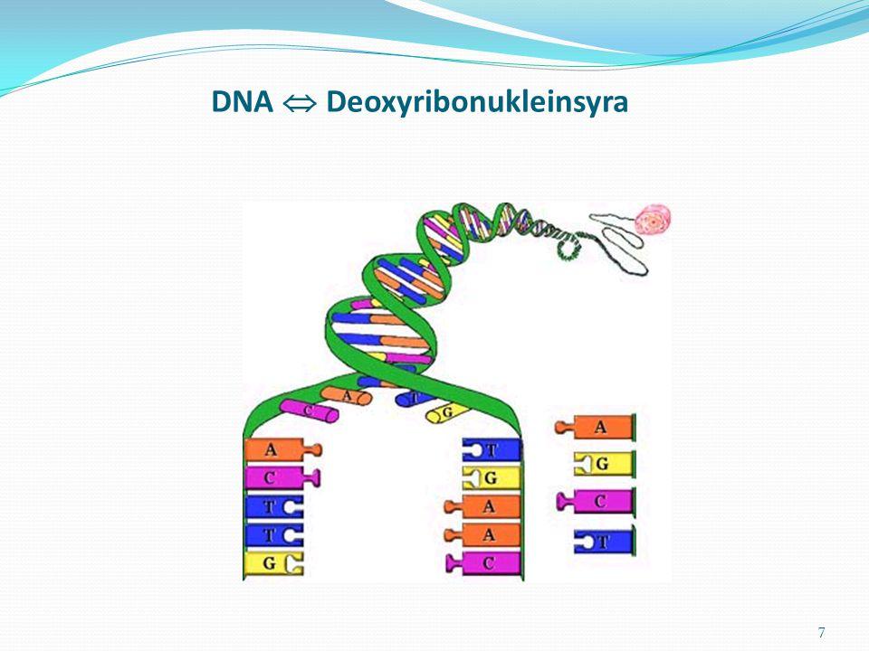 DNA  Deoxyribonukleinsyra