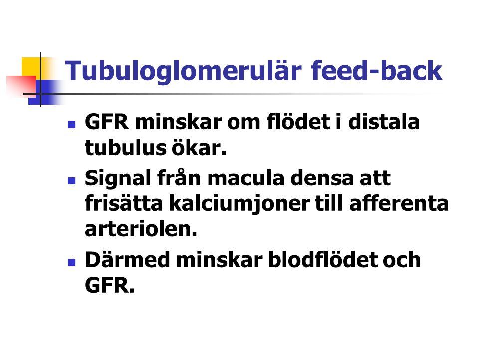 Tubuloglomerulär feed-back