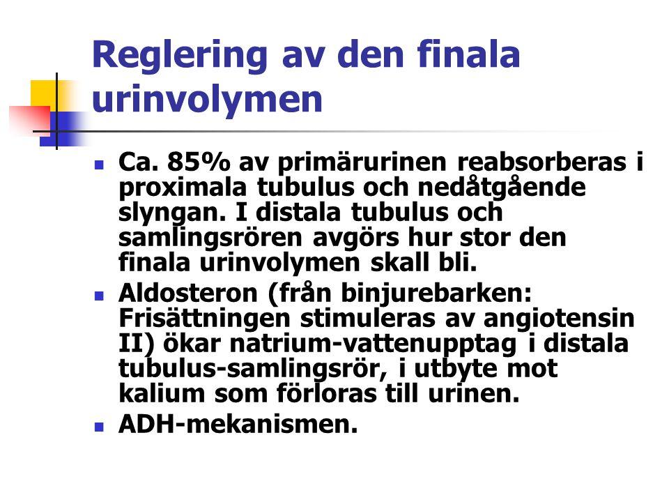 Reglering av den finala urinvolymen