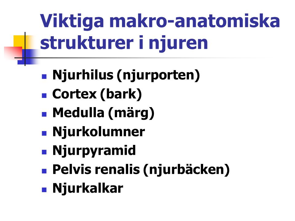 Viktiga makro-anatomiska strukturer i njuren