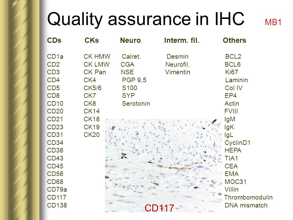 Quality assurance in IHC MB1