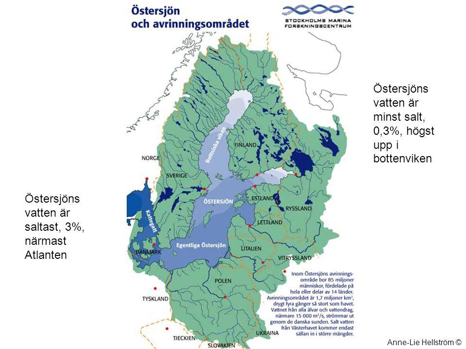 Östersjöns vatten är minst salt, 0,3%, högst upp i bottenviken