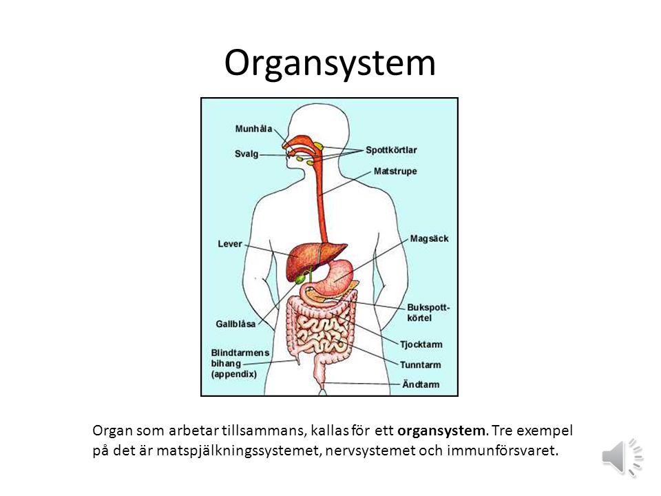 Organsystem Organ som arbetar tillsammans, kallas för ett organsystem.