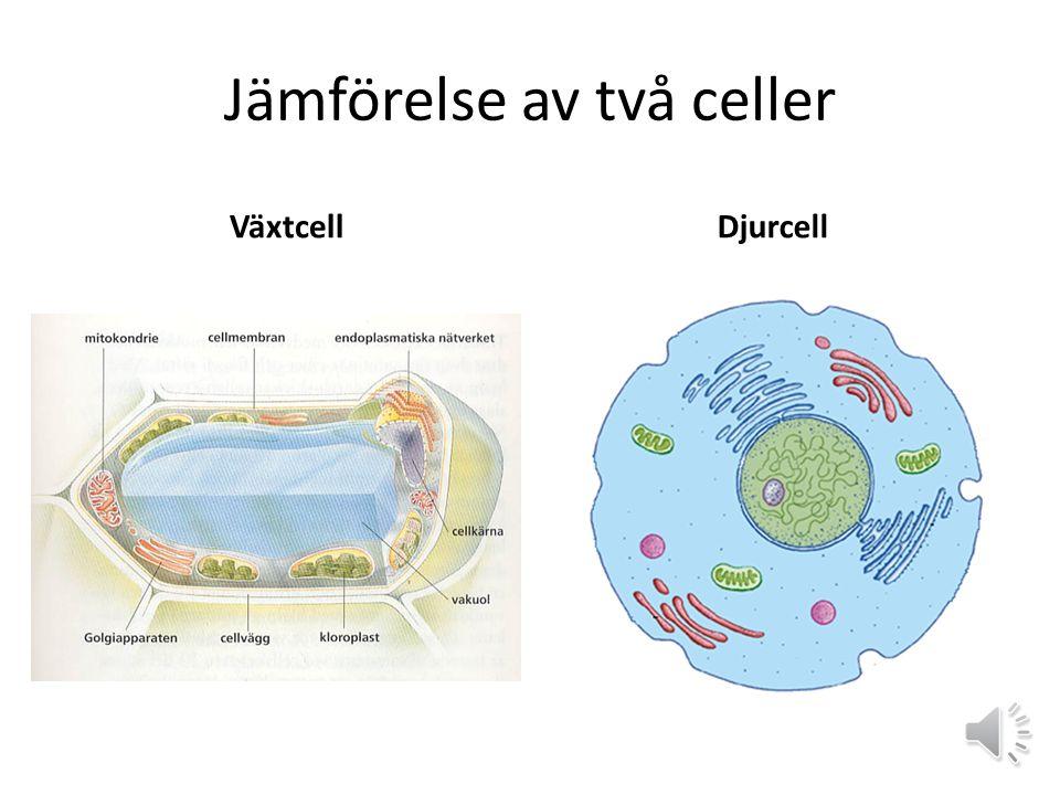 Jämförelse av två celler