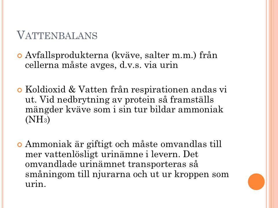 Vattenbalans Avfallsprodukterna (kväve, salter m.m.) från cellerna måste avges, d.v.s. via urin.