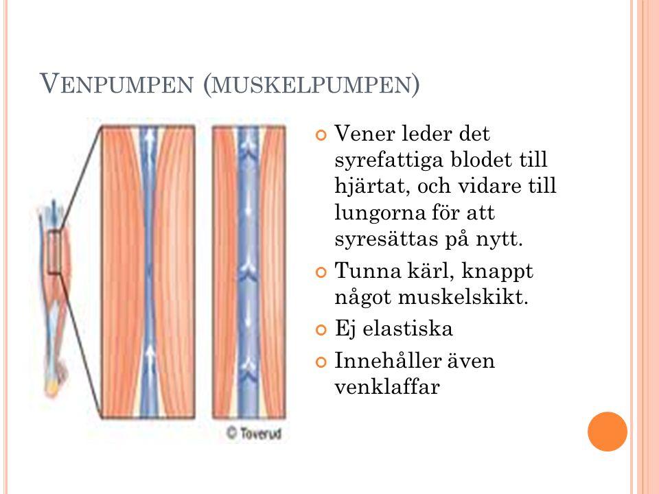 Venpumpen (muskelpumpen)
