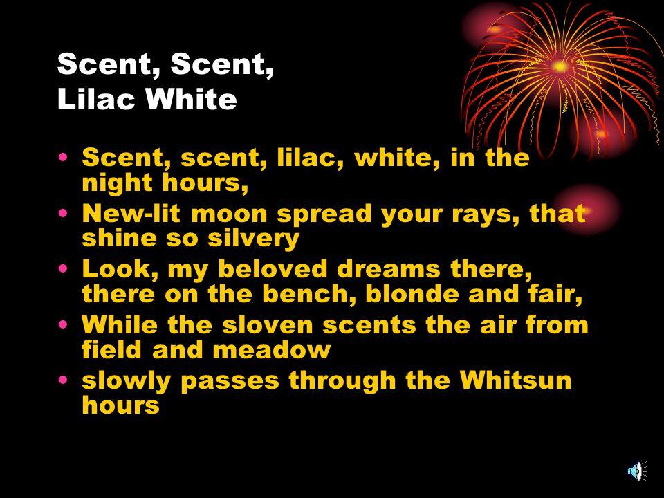 Scent, Scent, Lilac White