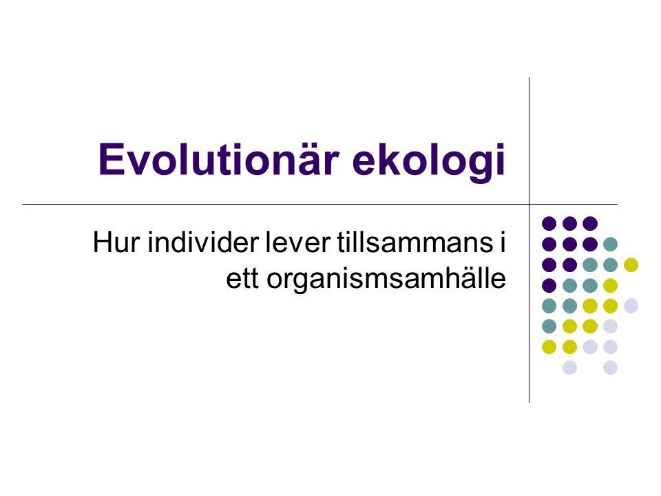 Hur individer lever tillsammans i ett organismsamhälle