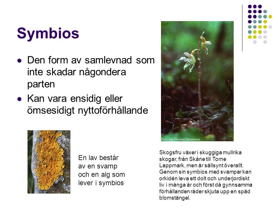 Symbios Den form av samlevnad som inte skadar någondera parten