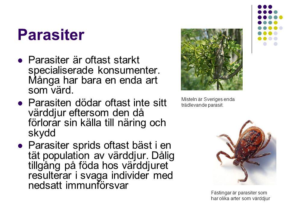 Parasiter Parasiter är oftast starkt specialiserade konsumenter. Många har bara en enda art som värd.