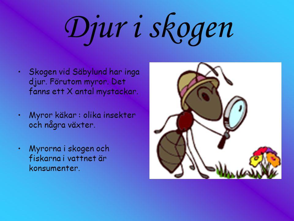 Djur i skogen Skogen vid Säbylund har inga djur. Förutom myror. Det fanns ett X antal mystackar. Myror käkar : olika insekter och några växter.
