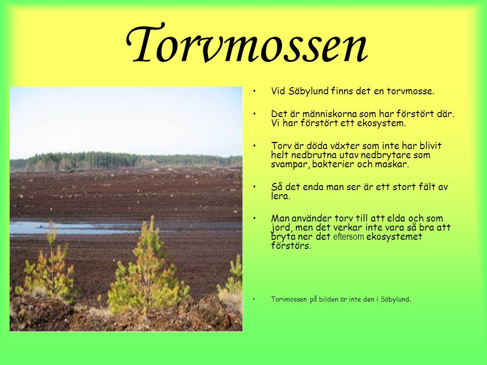 Torvmossen Vid Säbylund finns det en torvmosse.