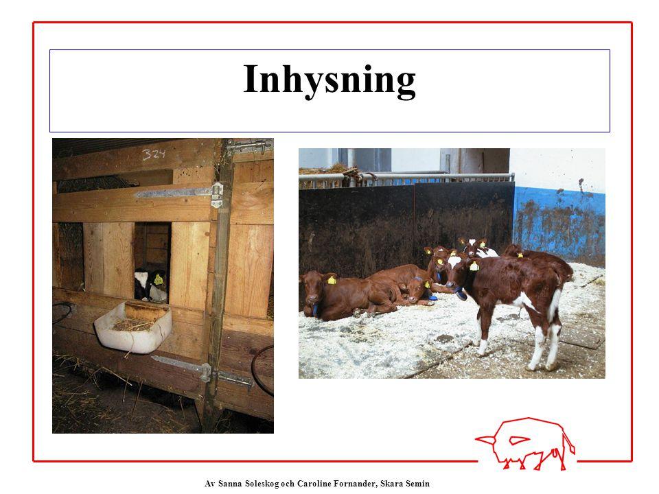 Inhysning