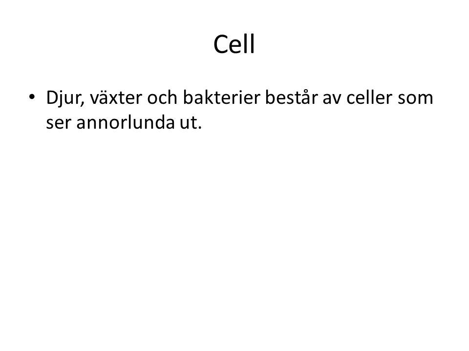 Cell Djur, växter och bakterier består av celler som ser annorlunda ut.