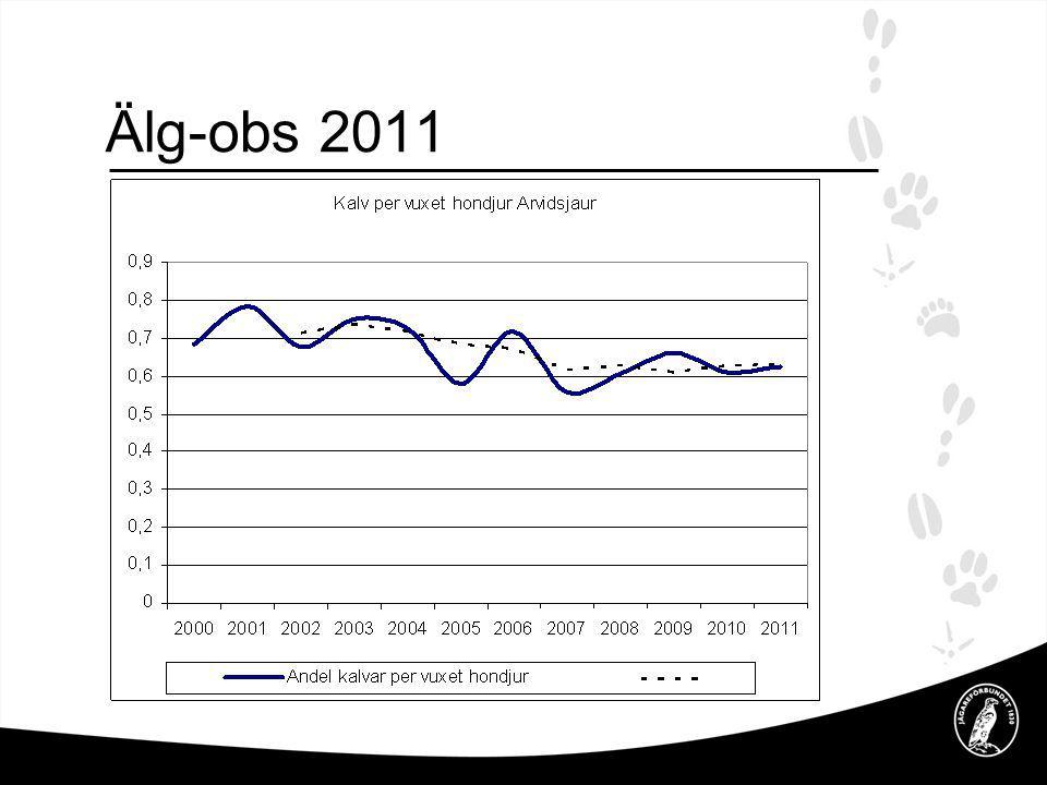 Älg-obs 2011 Tabell visar andelen kalv per vuxen ko i höststammen, slutsats en normal föryngring i antalsmässigt.