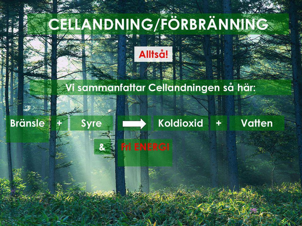 CELLANDNING/FÖRBRÄNNING Vi sammanfattar Cellandningen så här: