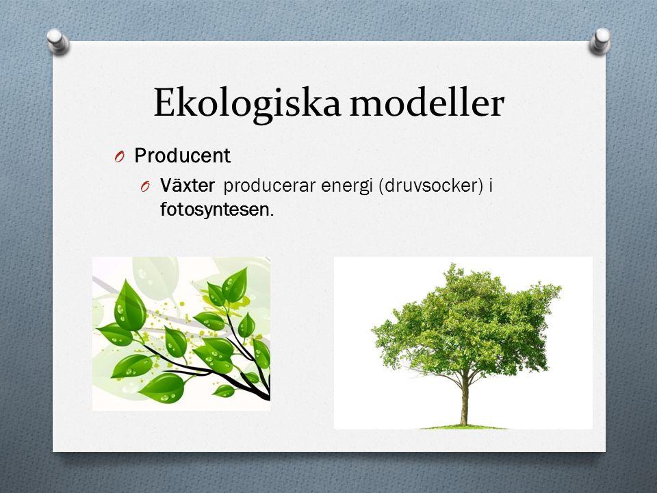 Ekologiska modeller Producent