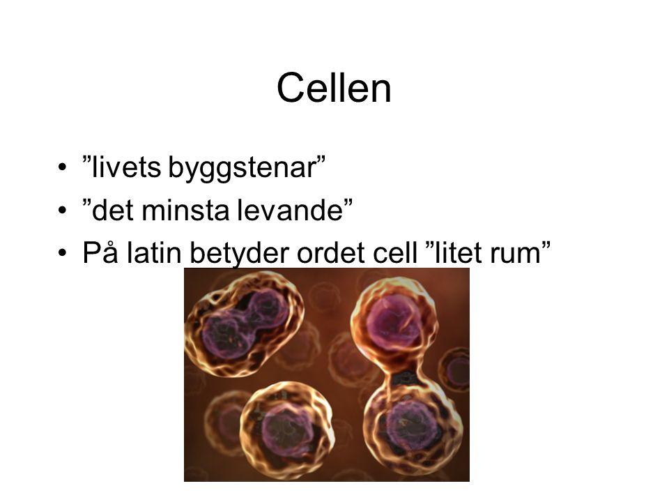 Cellen livets byggstenar det minsta levande