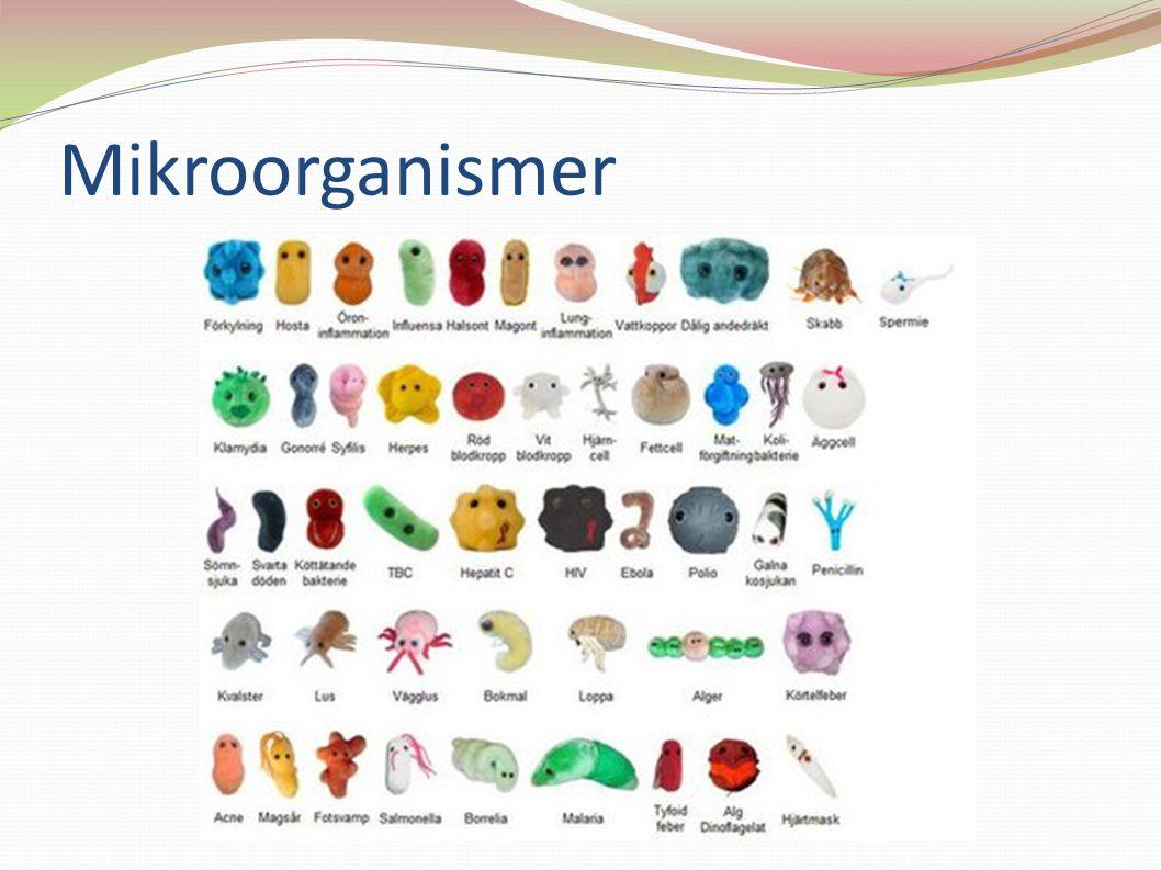 mikroorganismer i kroppen