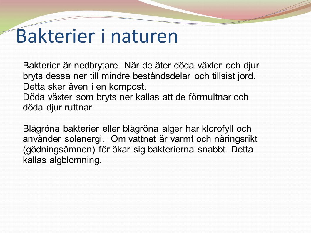 Bakterier i naturen