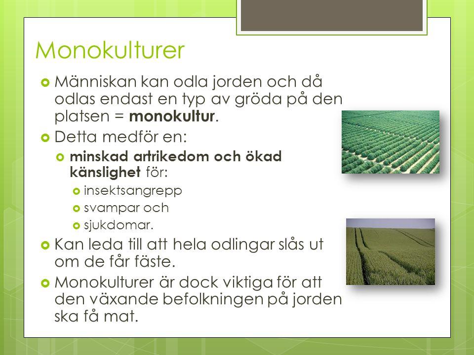 Monokulturer Människan kan odla jorden och då odlas endast en typ av gröda på den platsen = monokultur.