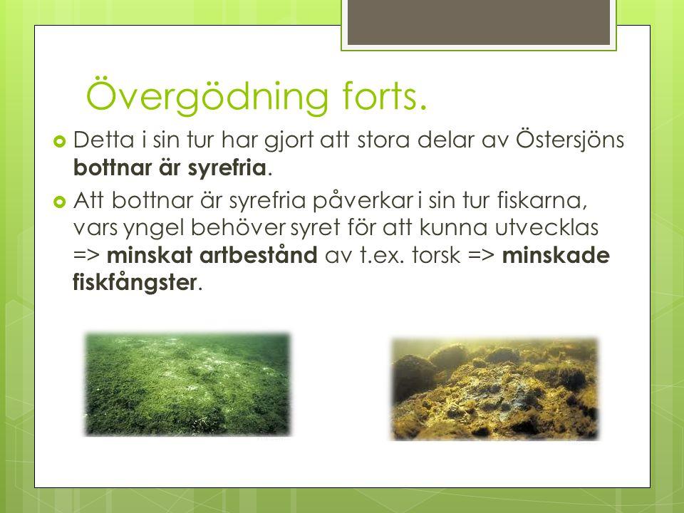 Övergödning forts. Detta i sin tur har gjort att stora delar av Östersjöns bottnar är syrefria.