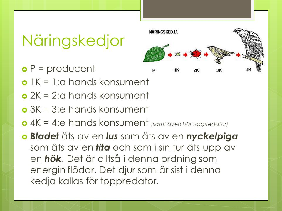 Näringskedjor P = producent 1K = 1:a hands konsument