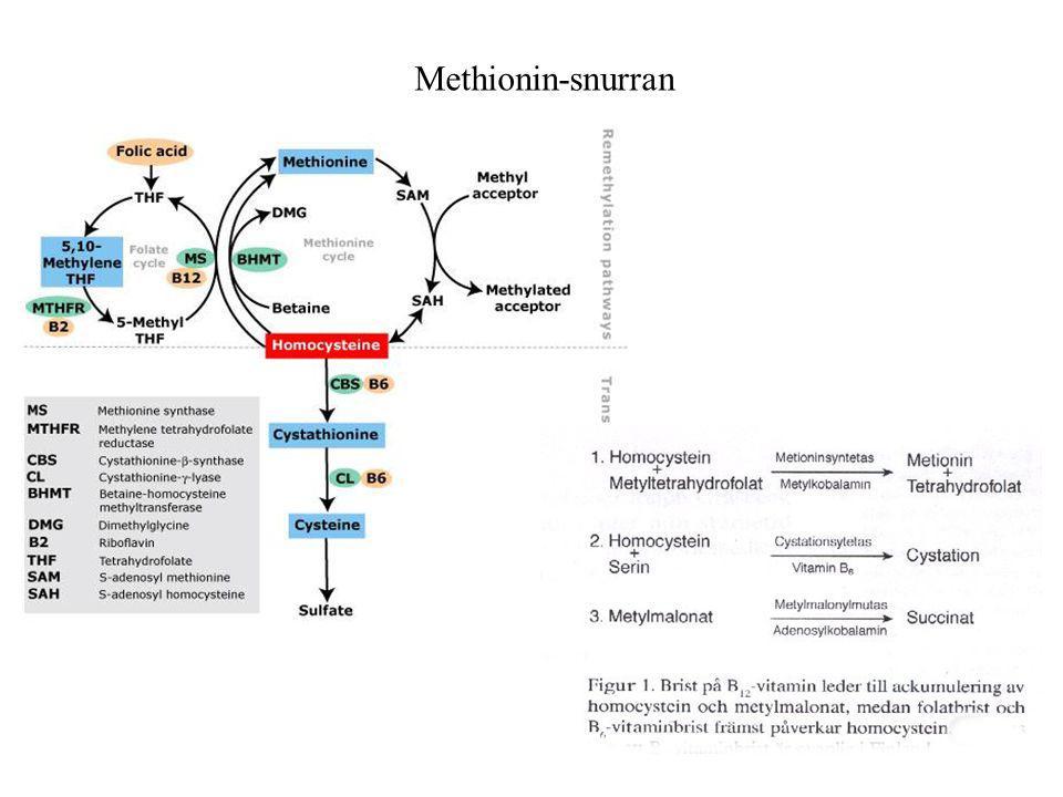 Methionin-snurran Hcy mellanled i remetyleringscykeln