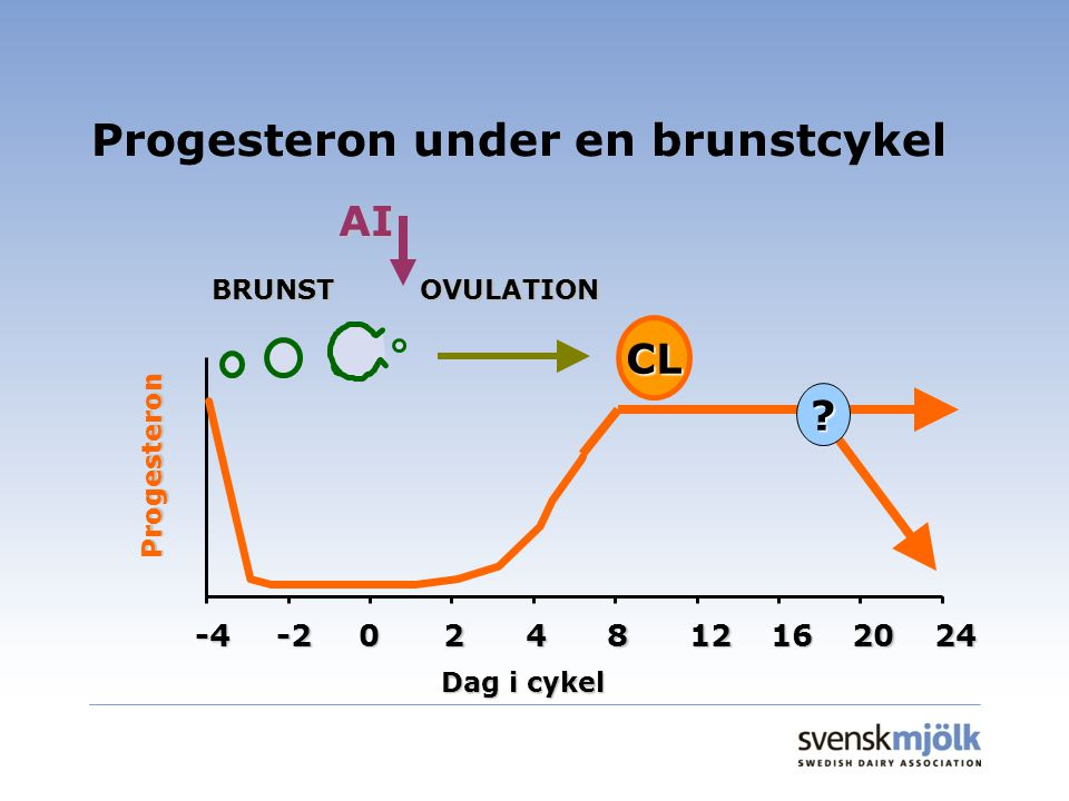 Progesteron under en brunstcykel