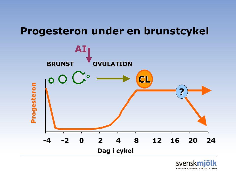 Progesteron under en brunstcykel