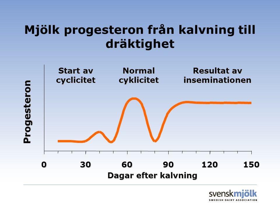 Mjölk progesteron från kalvning till dräktighet