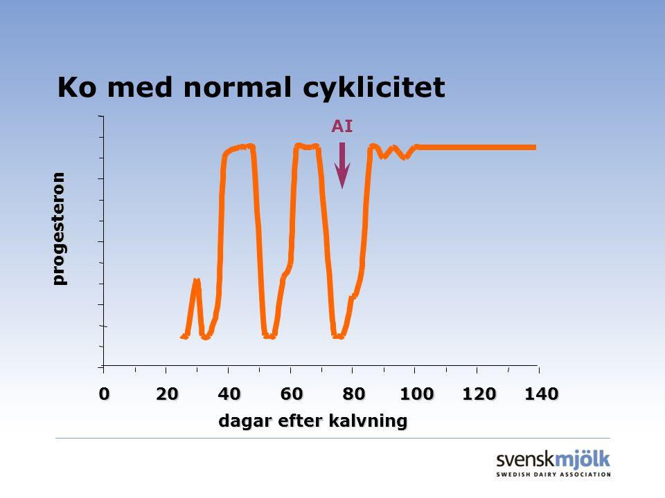 Ko med normal cyklicitet