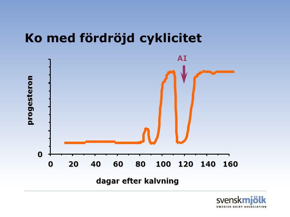Ko med fördröjd cyklicitet