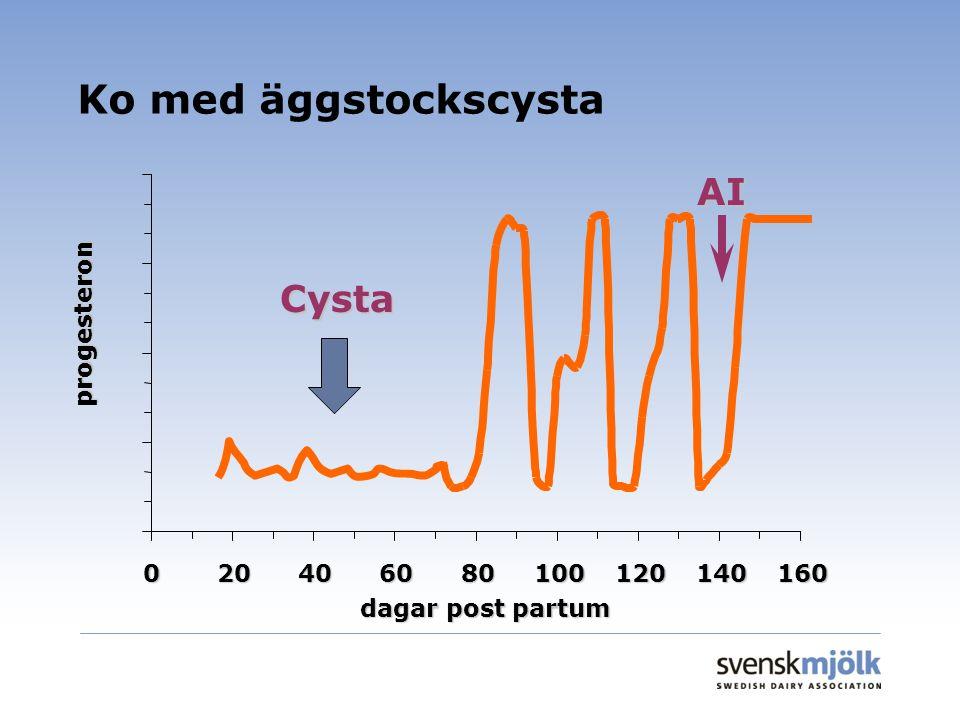 Ko med äggstockscysta AI Cysta progesteron 20 40 60 80 100 120 140 160