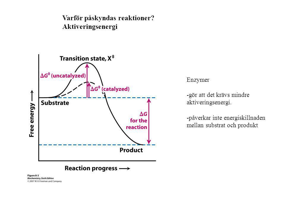 Varför påskyndas reaktioner Aktiveringsenergi