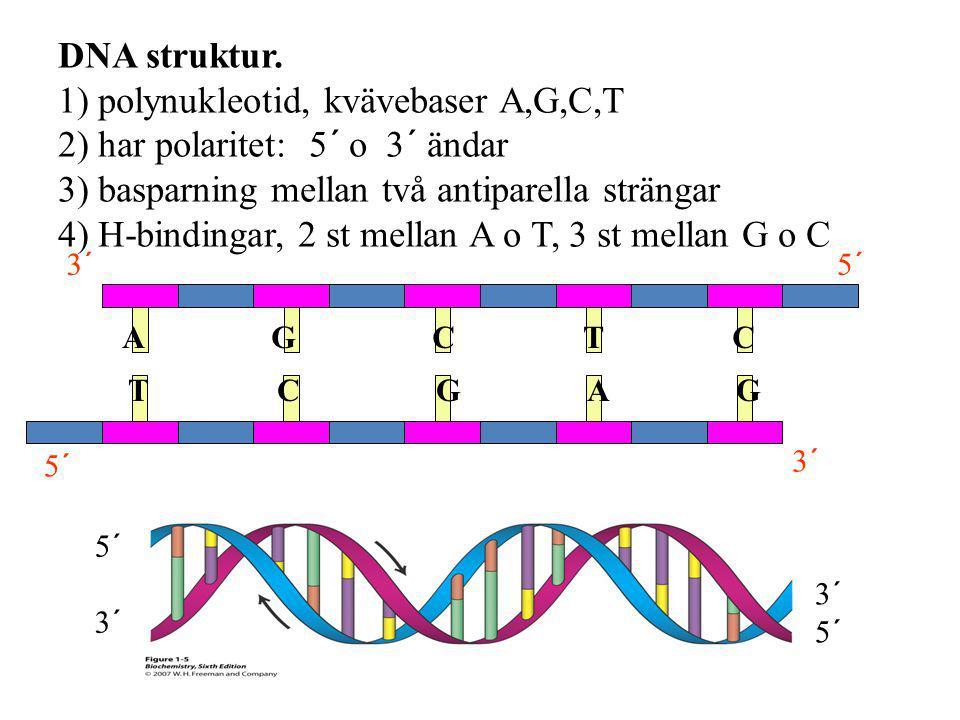 1) polynukleotid, kvävebaser A,G,C,T 2) har polaritet: 5´ o 3´ ändar