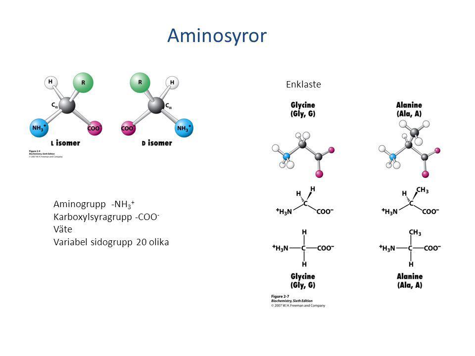 Aminosyror Enklaste Aminogrupp -NH3+ Karboxylsyragrupp -COO- Väte