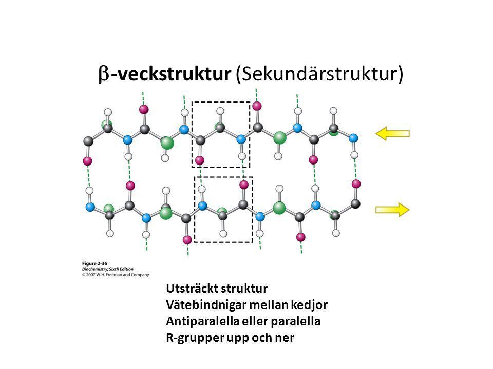 b-veckstruktur (Sekundärstruktur)