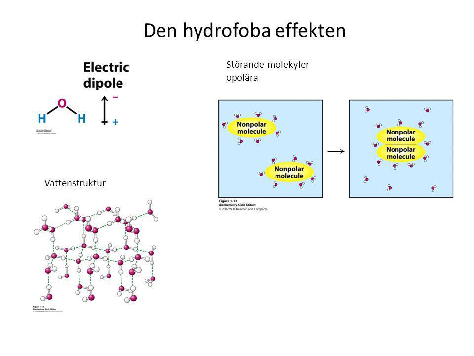 Den hydrofoba effekten