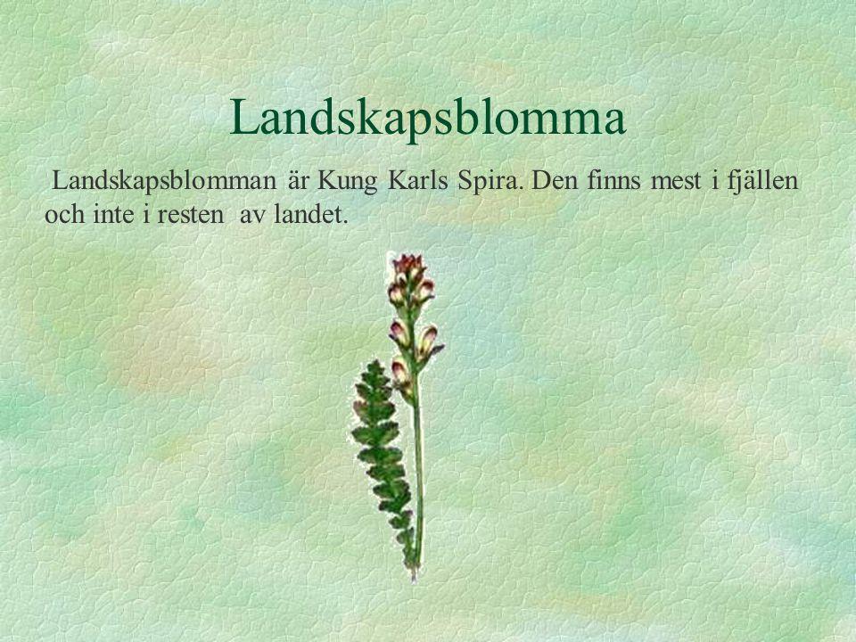 Landskapsblomma Landskapsblomman är Kung Karls Spira.