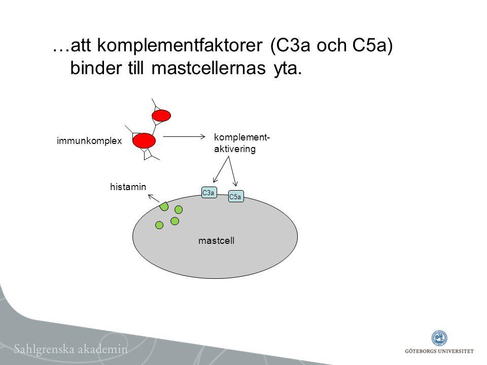 …att komplementfaktorer (C3a och C5a) binder till mastcellernas yta.
